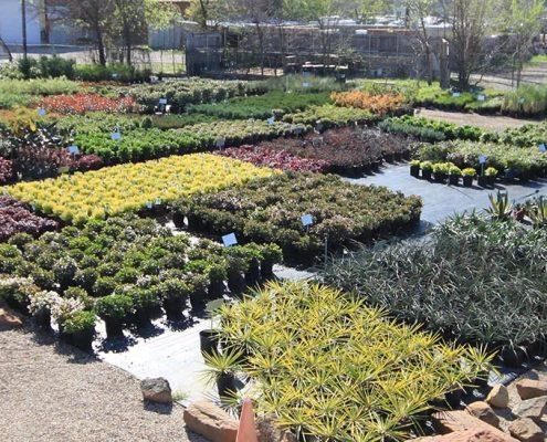 Dallas Whole Nursery And Landscape